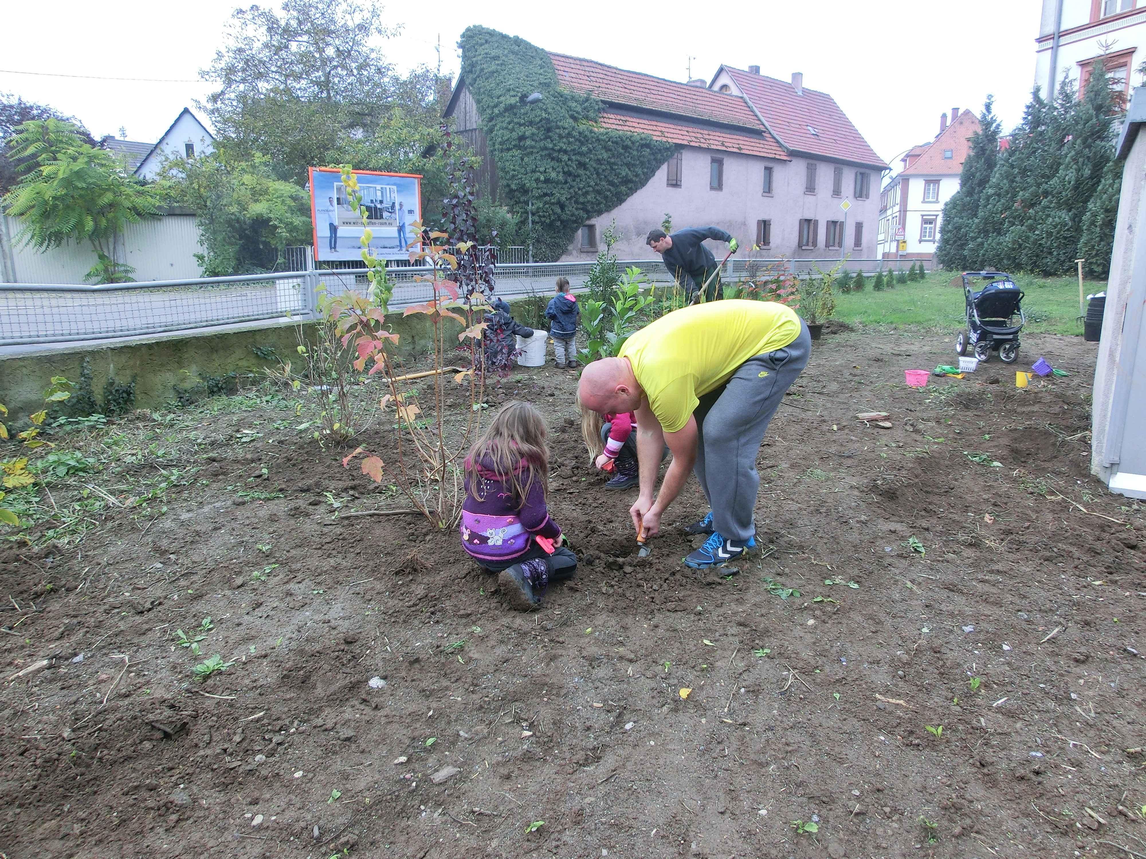 Medelių sodinimas (Ingos foto)